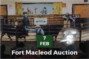 auction2-01